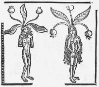 alraune-hieronymus-brunschwig-kleines-destillierbuch-strassburg-1500-klein