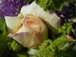 Von Rapunzeln Harten Erbsen Und Dem Garten Des Paradieses Grünwort
