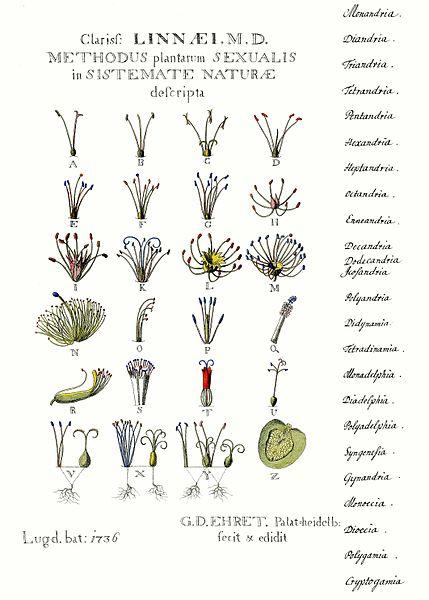 Linnés Pflanzentafel